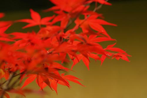 Autumnleaves_beizjp_s02147_2